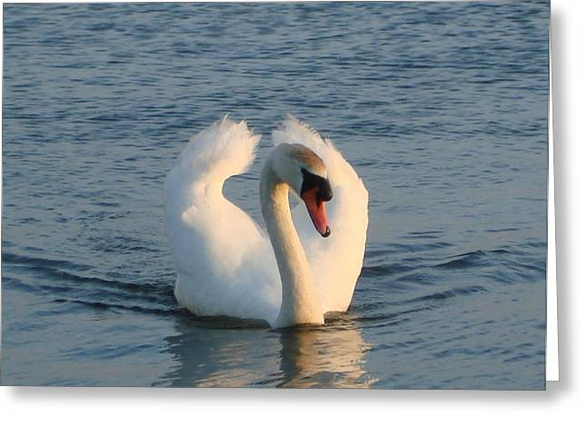 Greeting Card featuring the photograph Swan by Katy Mei