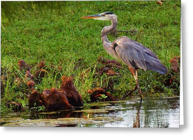 The Great Blue Heron Greeting Card by E Luiza Picciano