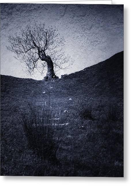 Tree Greeting Card by Svetlana Sewell