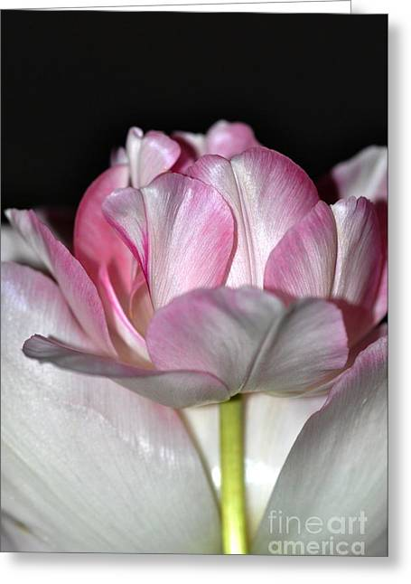 Greeting Card featuring the photograph Tulipe by Sylvie Leandre