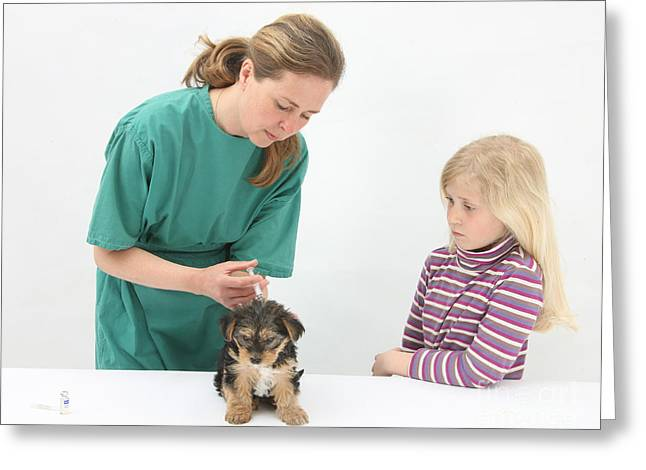 Vet Giving Pup Its Primary Vaccination Greeting Card by Mark Taylor