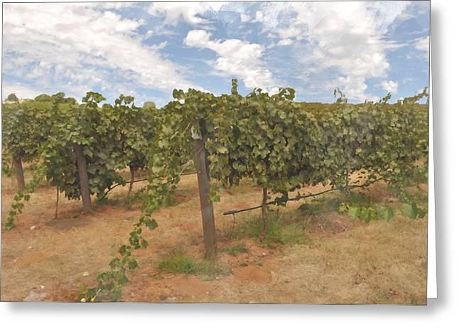 Vineyard Blue Sky Greeting Card by Brandon Bourdages