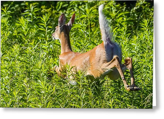 White-tailed Deer Greeting Card by Brian Stevens