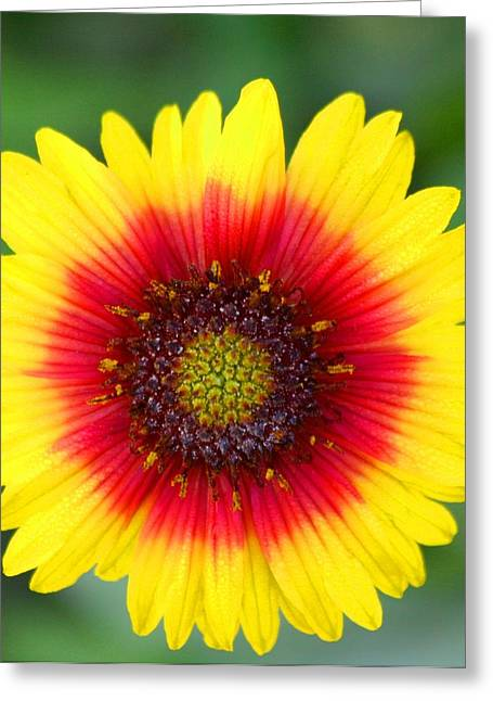 Wild Flower Greeting Card by Jeanne Andrews