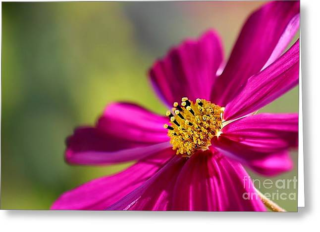Greeting Card featuring the photograph Yellow Dots by Henrik Lehnerer
