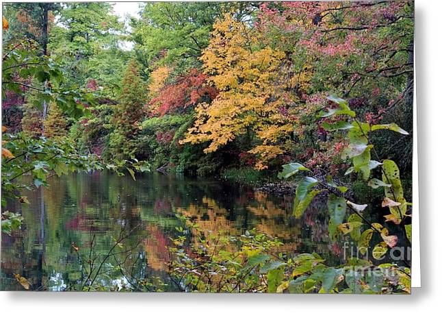 Sugar Ridge State Fish And Wildlife Area Greeting Card by Jack R Brock