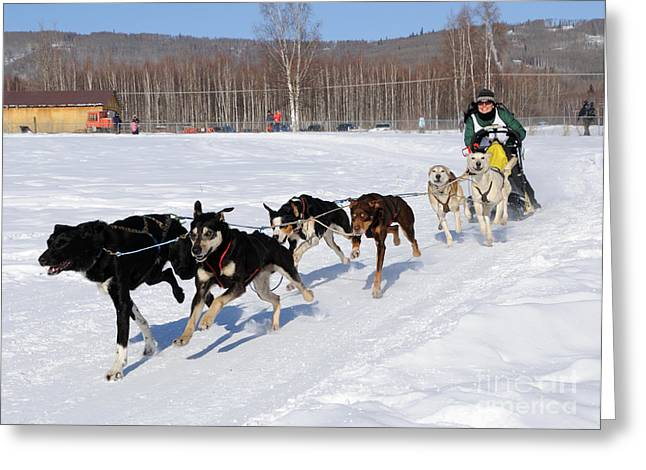 2010 Limited North American Sled Dog Race Greeting Card by Gary Whitton