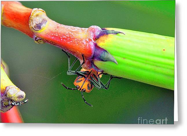 Nature And Wildlife Series Greeting Card
