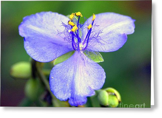 Flowers Of The Forest Series  Greeting Card by Terry Troupe