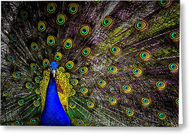 Peacock Greeting Card by Brian Stevens