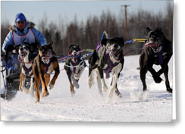 2011 Limited North American Sled Dog Race Greeting Card by Gary Whitton
