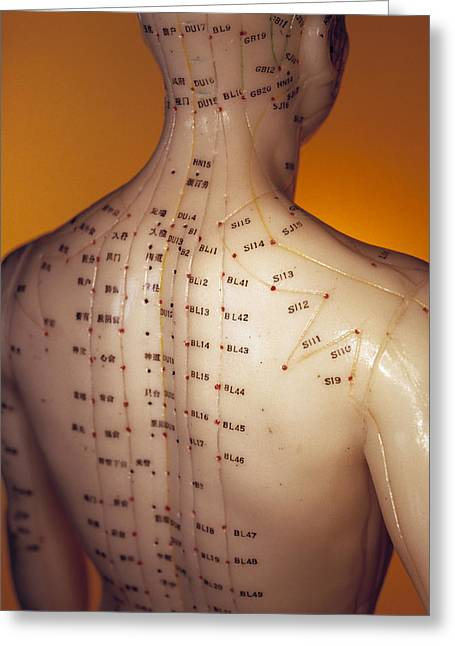 Acupuncture Model Greeting Card