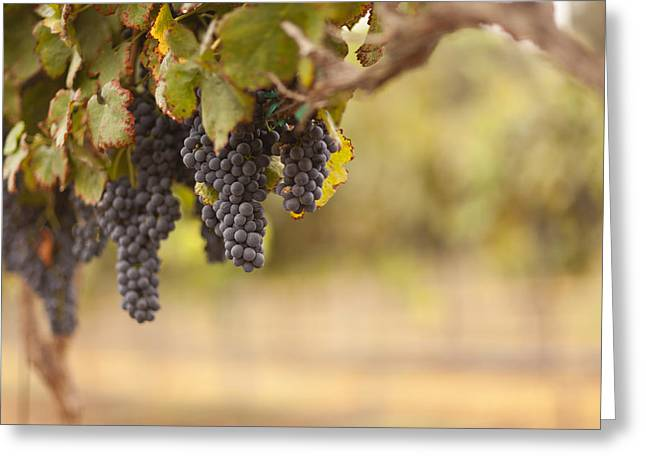 Beautiful Lush Grape Vineyard In The Morning Sun And Mist Greeting Card by Andy Dean