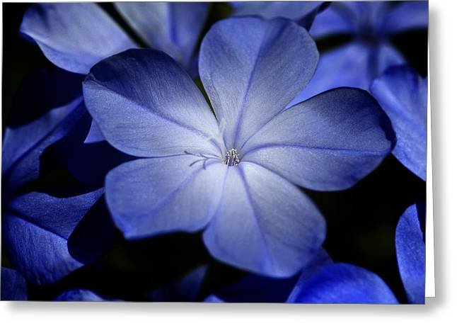Blue Greeting Card by Al Hurley