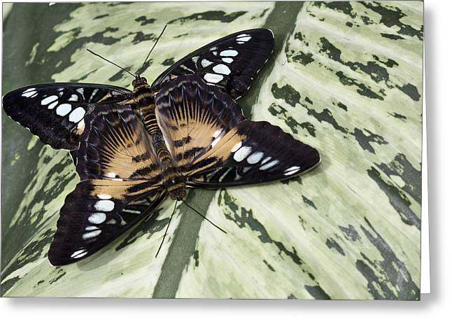 Butterfly Greeting Card by Nick Mares