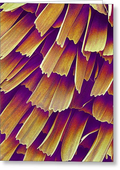 Butterfly Wing, Sem Greeting Card by Susumu Nishinaga