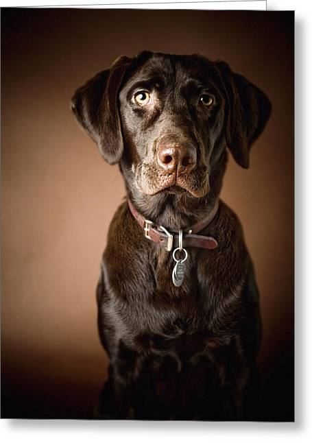 Chocolate Labrador Retriever Portrait Greeting Card by David DuChemin