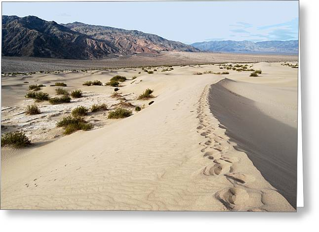 Death Valley National Park Mesquite Flat Sand Dunes Greeting Card by Eva Kaufman