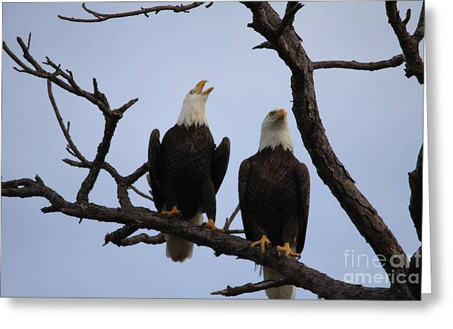 Eagles Greeting Card by Jeanne Andrews