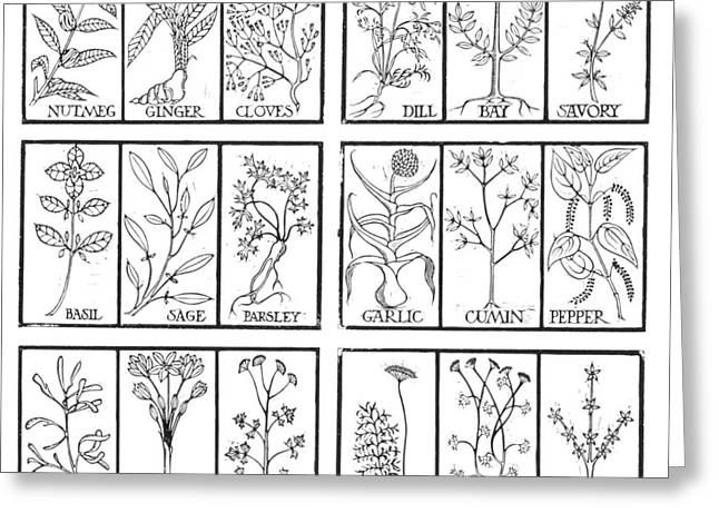 Edible Herbs Greeting Card by Science Source