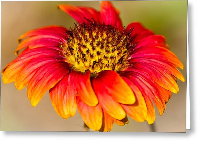 Flowers Greeting Card by Mike Rivera