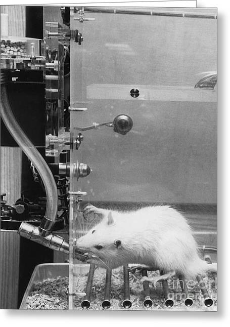 Lab Rat Greeting Card by Omikron