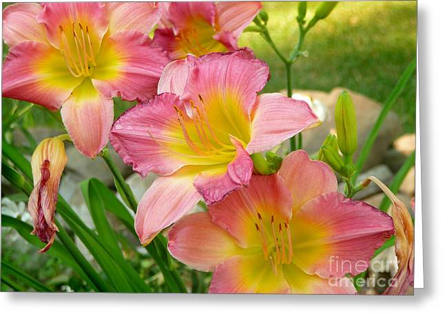 3 Lillies Greeting Card