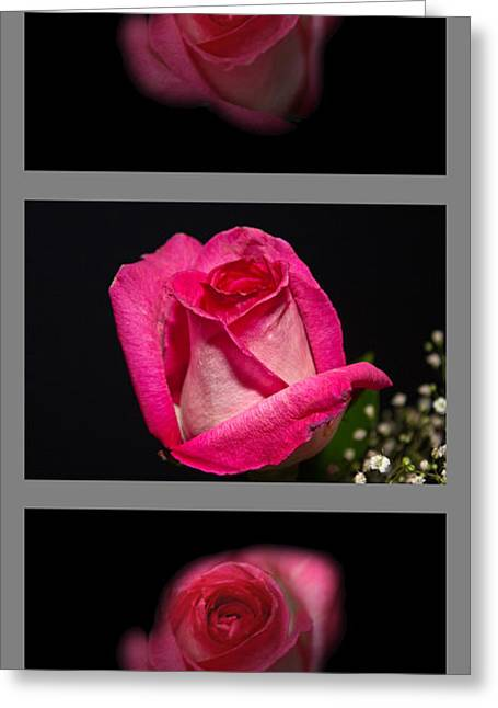 3 Little Roses Greeting Card