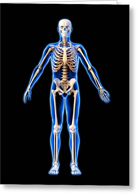 Male Skeleton, Artwork Greeting Card by Roger Harris