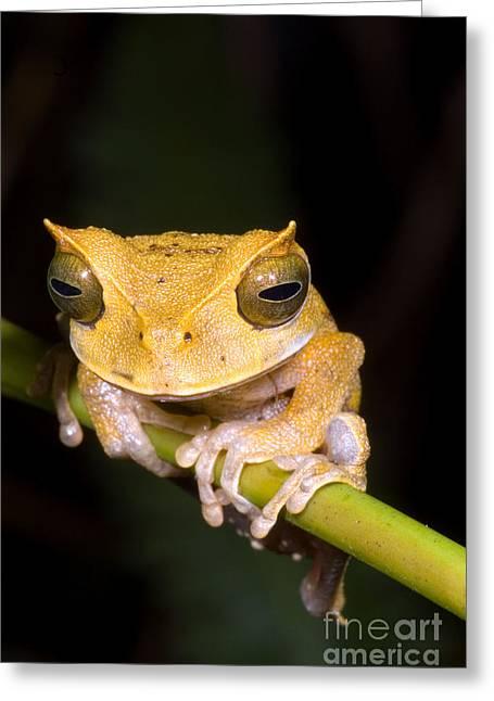 Marsupial Frog Greeting Card by Dante Fenolio