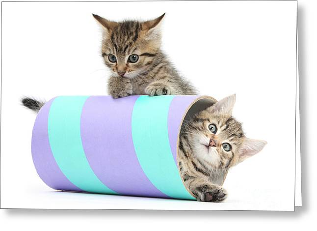 Playful Kittens Greeting Card by Mark Taylor