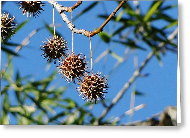 3 Pods On A Tree Greeting Card by Liz Vernand