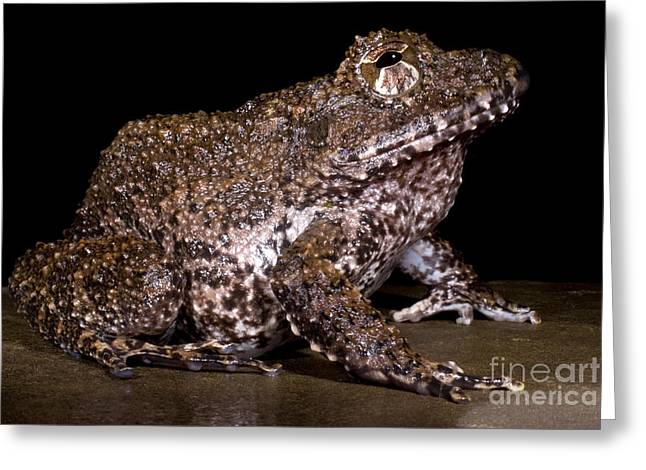 Rusty Robber Frog Greeting Card by Dante Fenolio