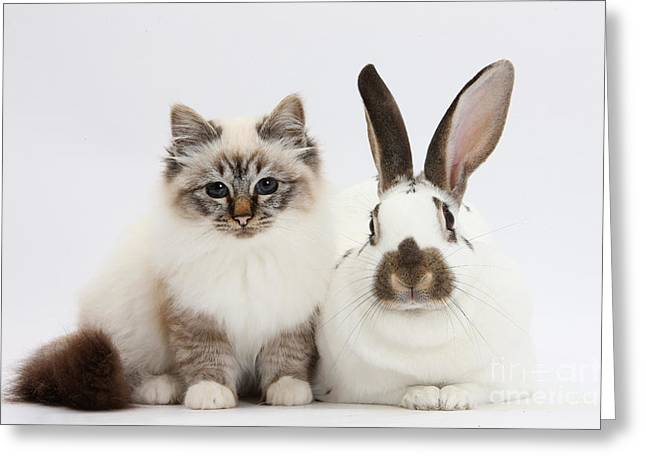 Tabby-point Birman Cat And Rabbit Greeting Card