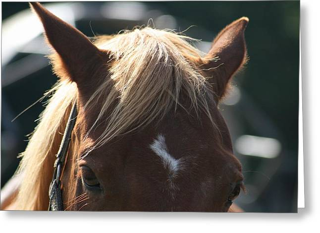 The Beauty Of The Horses Greeting Card by Valia Bradshaw