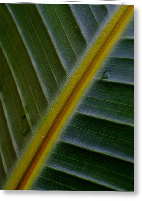 Greeting Card featuring the photograph Wild Banana Leaf by Werner Lehmann