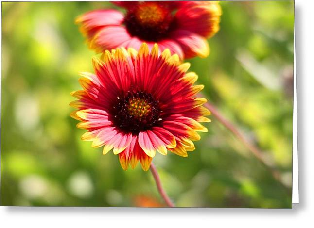 Greeting Card featuring the photograph Wild Flower by Jeanne Andrews