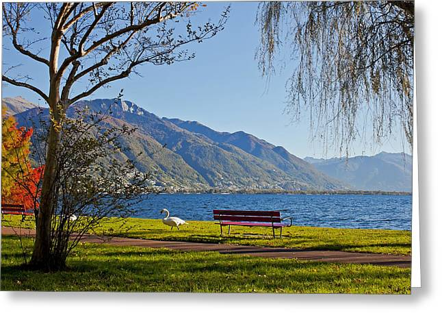 Lake Maggiore Greeting Card by Joana Kruse