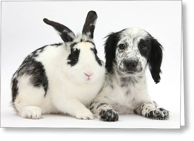 Puppy And Rabbit Greeting Card by Mark Taylor