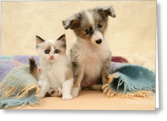Kitten And Pup Greeting Card