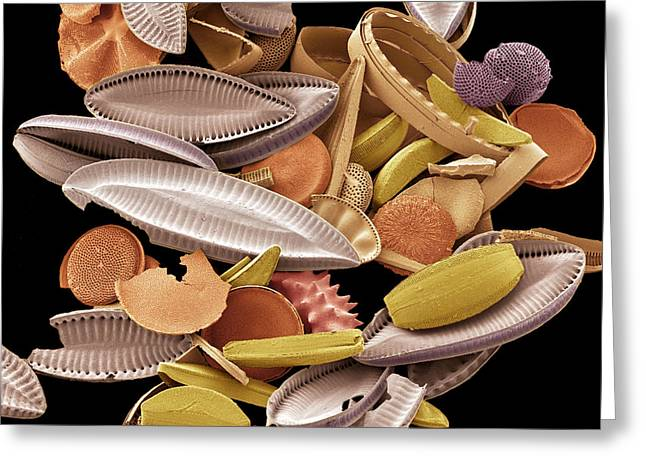 Diatoms, Sem Greeting Card