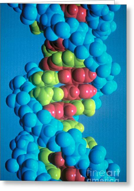 Dna Greeting Card by Science Source