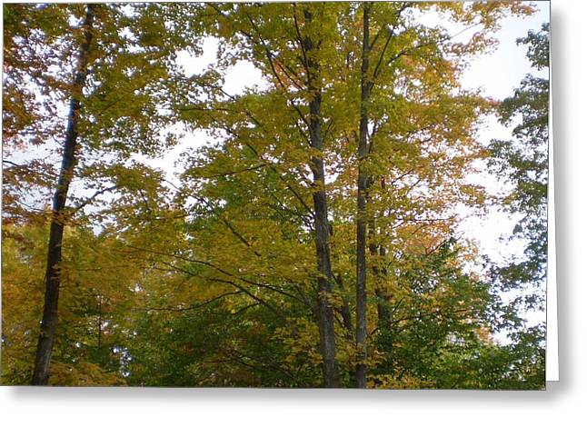 Fall Colors Collection - Michigan Greeting Card