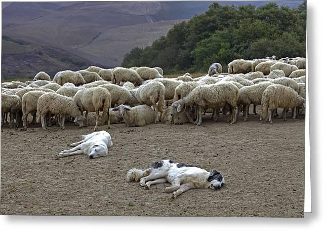 Flock Of Sheep Greeting Card by Joana Kruse