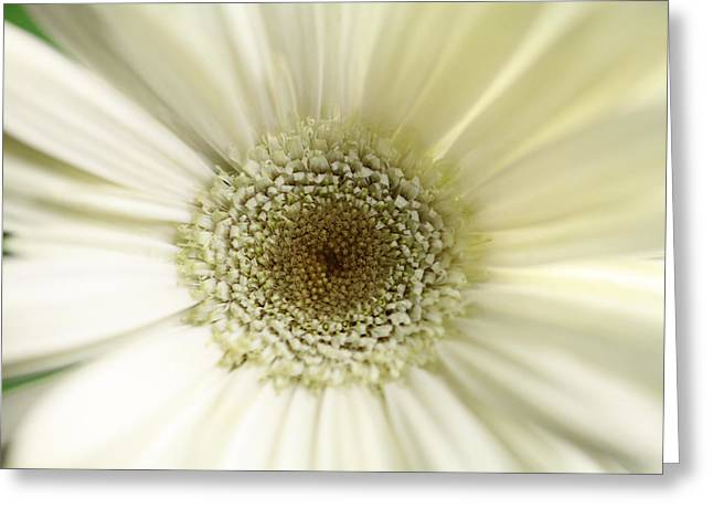 Flower Greeting Card by Falko Follert