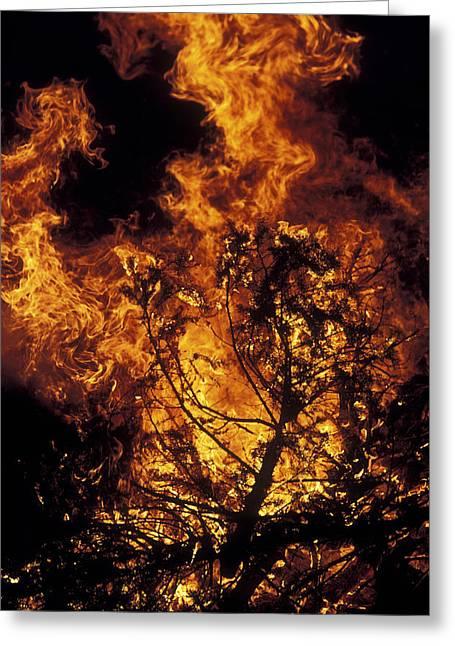 Forest Fire Greeting Card by Kaj R. Svensson