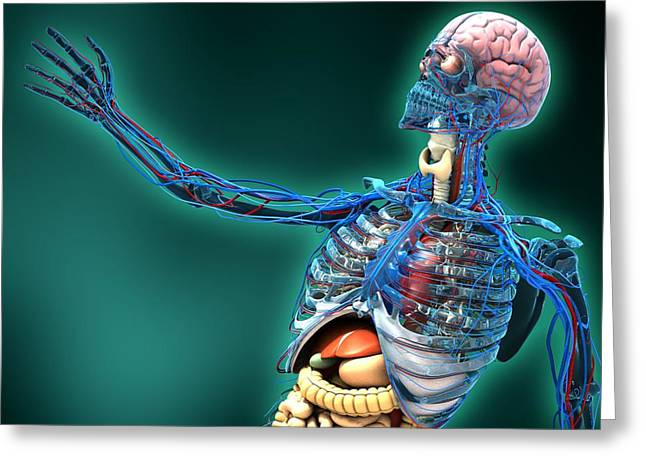 Human Anatomy, Artwork Greeting Card by Carl Goodman