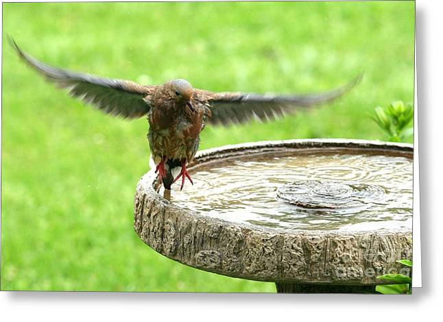 Greeting Card featuring the photograph Mourning Dove by Jack R Brock