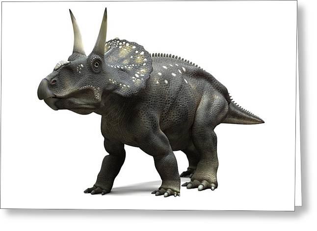 Nedoceratops Dinosaur, Artwork Greeting Card by Sciepro