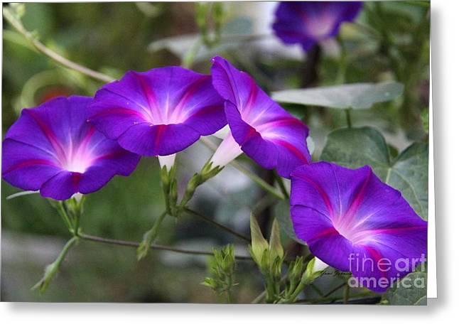 4 Purples Greeting Card by Yumi Johnson